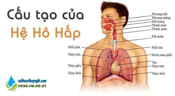 cấu tạo của hệ hô hấp