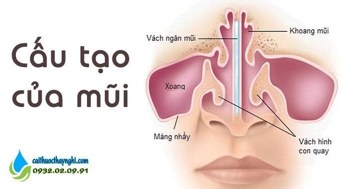cấu tạo của mũi