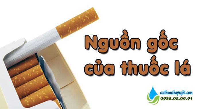nguồn gốc của thuốc lá