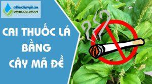cai thuốc lá bằng cây mã đề