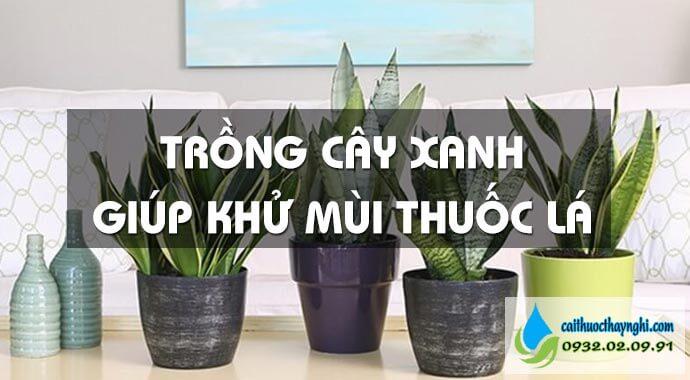 trồng cây xanh để khử mùi thuốc lá trong phòng